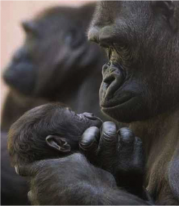 David Daniels Explains how Physical Touch is Necessary for bonding across all Mammal Species, even Primates and Humans, for Healthy Bonding Attachment and Infant Development; Enneagram